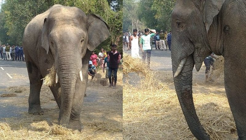 Elephants take away rice from road in Jhargram