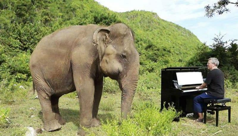 Blind Elephant Dances to classical music