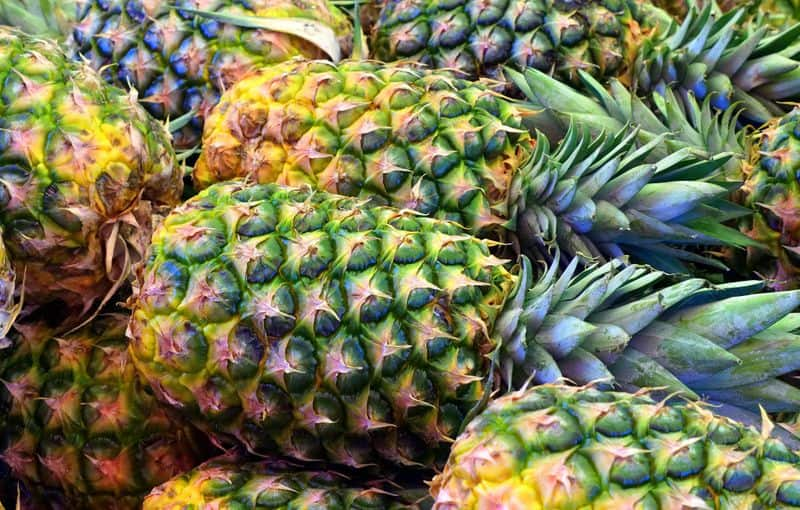 growing pineapples agricultural news