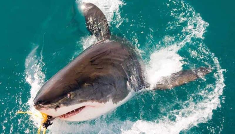 Millions Of Sharks Silently Suffer In Pain