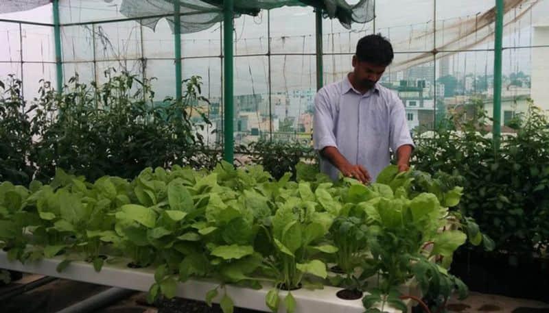 guerrilla gardeners in Bangalore