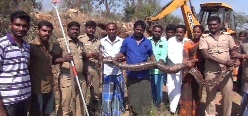 python entered in a farmland