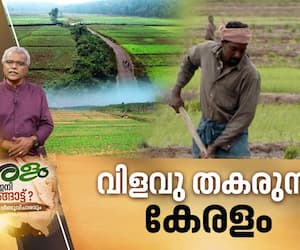 why kerala fails in agricultural sector