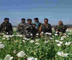 police and crpf destroyed 3 acres of opium crop in jamui forest pra