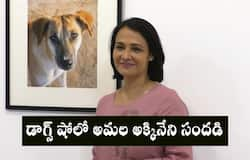 veteran actor Amala Akkineni Speaks About Her love for dogs
