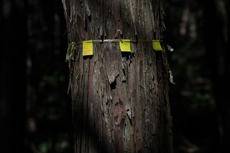 The suicide forest of Japan