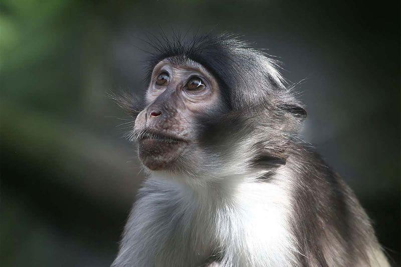Unnatural deaths of monkeys creates panic in Howrah
