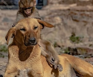 The merciless people killed the mother with poison, then the dog took the baby in lap MJA