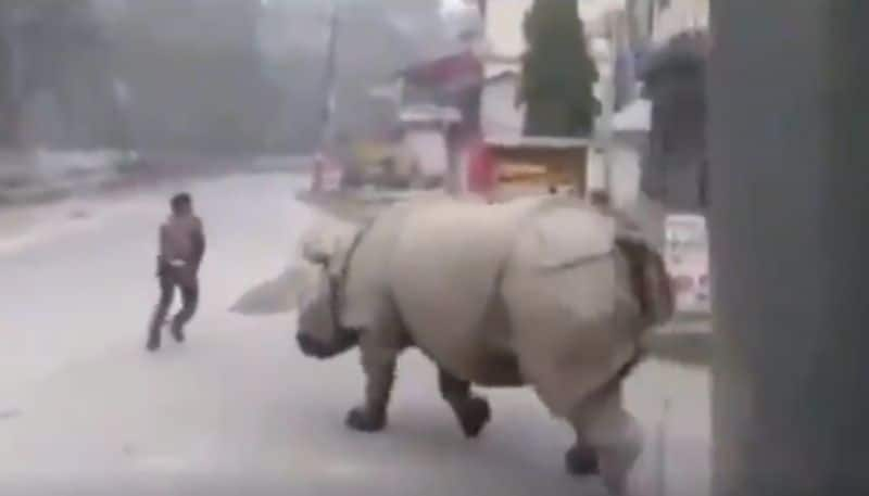 In lock down Rhino chases a man on street video goes viral