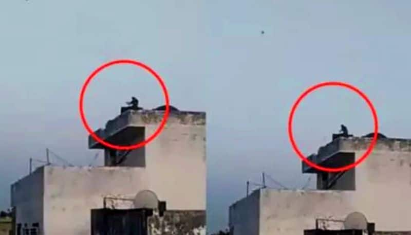 A monkey captured flying kite amid lockdown, video goes Viral