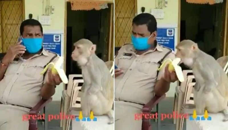 Cop Feeds Banana To Monkey With No Hands