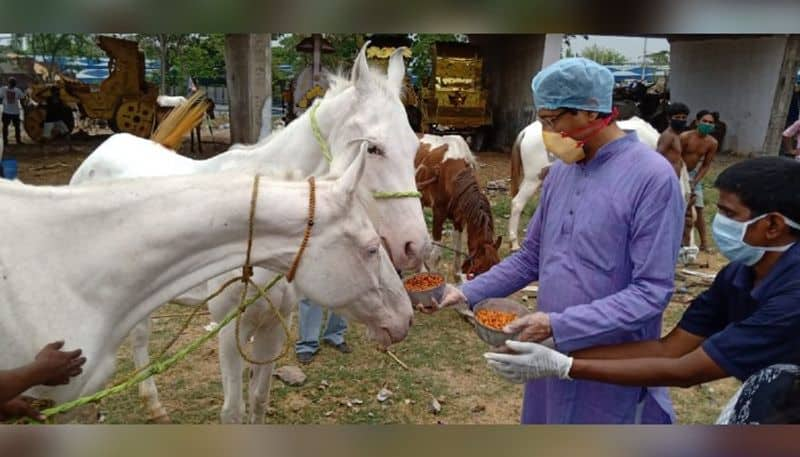 Forest department to take responsibility of food for horses in Kolkata