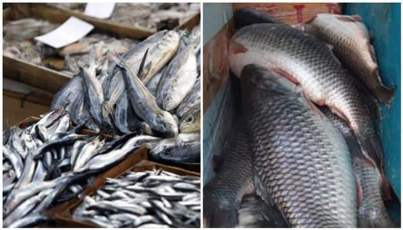 rotten fish seized from walayar