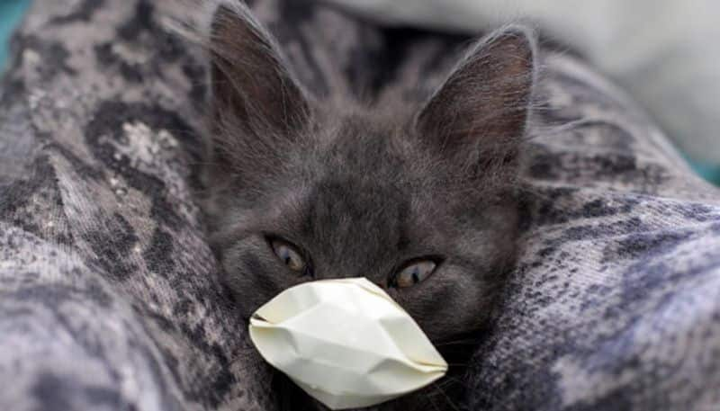 Two cats in New York are first pets known to have coronavirus in the US