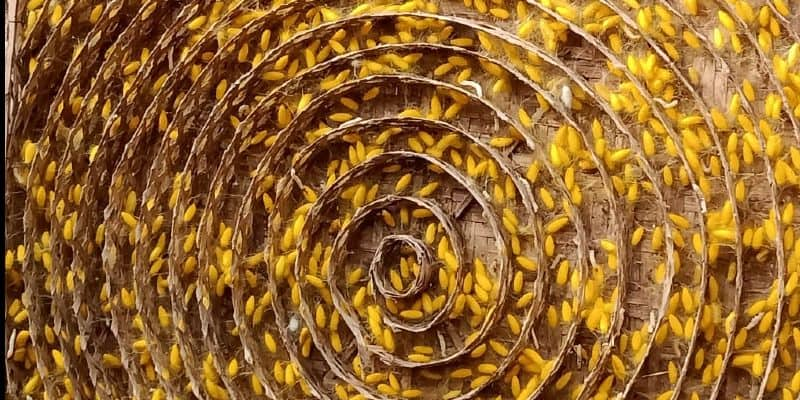 বীরভূমের নলহাটি ২ ব্লকের দক্ষিণপুর ভদ্রপুর গ্রাম। গ্রামে ৬০টি পরিবারের বাস। রেশমগুটি চাষ করে সংসার চলে সকলেরই। পুরুষরা তো বটেই, এই কাজে হাত লাগান মহিলারাও।