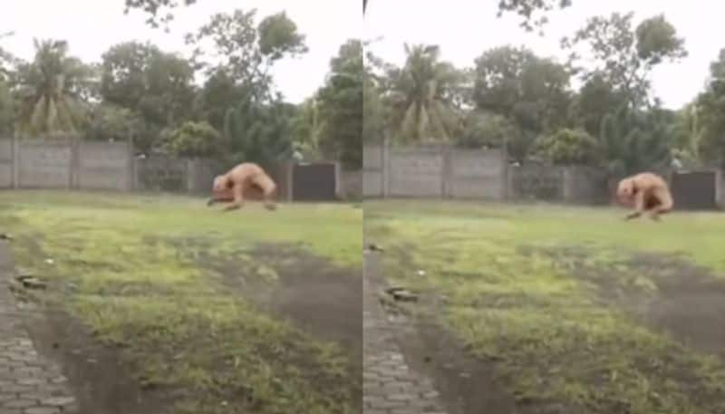 Mysterious Creatures found in a local area video goes viral