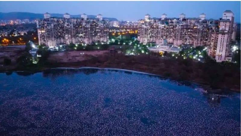 <p>Thousands of the birds have descended upon the nation's largest city Mumbai in recent weeks, with many congregating in urban areas usually trafficked by humans.</p>