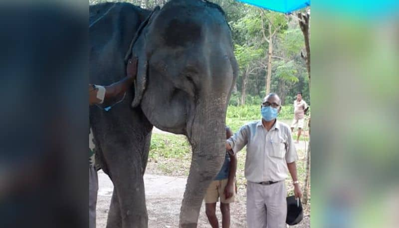 Forest department lost elephant after 50 years of service