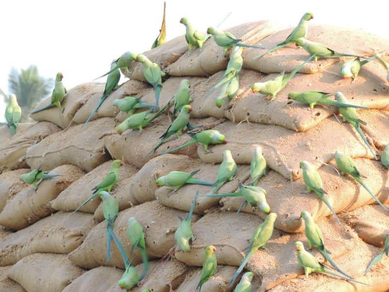 എന്നാല്, പ്രചരിക്കുന്ന ചിത്രത്തിന് കൊവിഡ് 19 ലോക്ക് ഡൗണുമായി ബന്ധമൊന്നുമില്ല എന്നതാണ് വാസ്തവം. ഈ ചിത്രം 2014 മുതലുള്ളതാണ് എന്ന്റിവേഴ്സ് ഇമേജ്സെര്ച്ചില്വ്യക്തമായി.