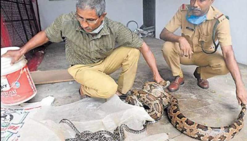 python babies in forest office Karuvannur