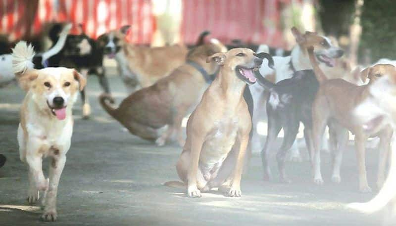 dogs found dead in mysore