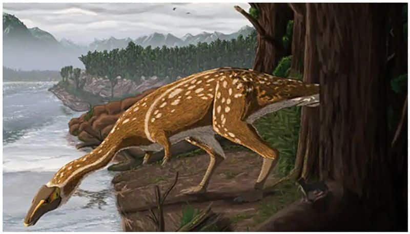 The fossil of toothless dinosaur unearthed