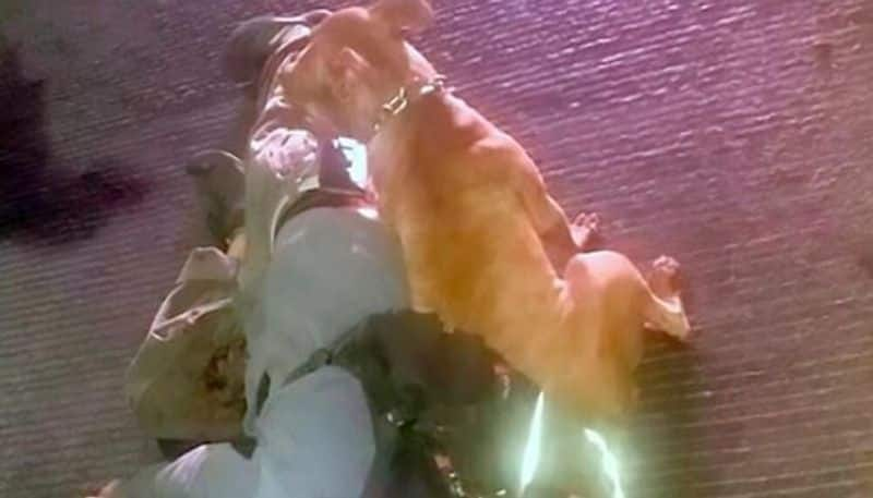 pet dog found near to the dead body of its owner in jalisco