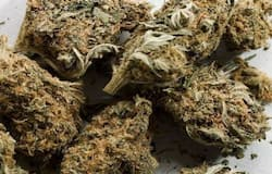 <p>It must be mentioned that medicinal cannabis programmes are allowed in over 50 countries, while other countries such as Uruguay, Canada, Mexico, Luxembourg have permitted its recreational use.</p>