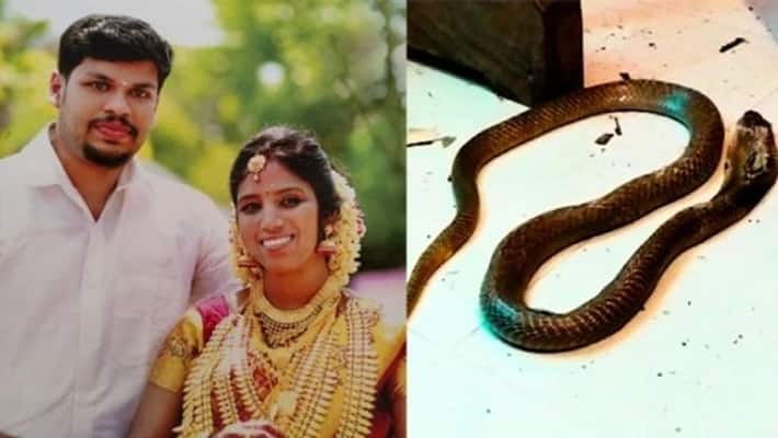 Husband who murdered his wife by bitten by a snake bakir vote The horrific incident in Kerala