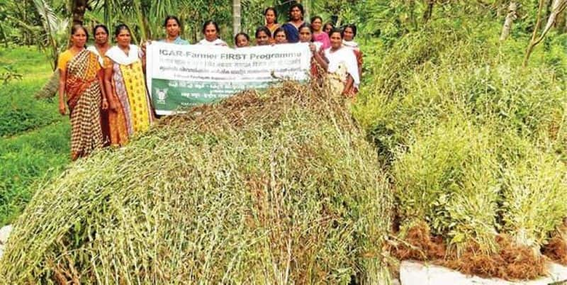 women initiative Sesame cultivation  is a model for the state
