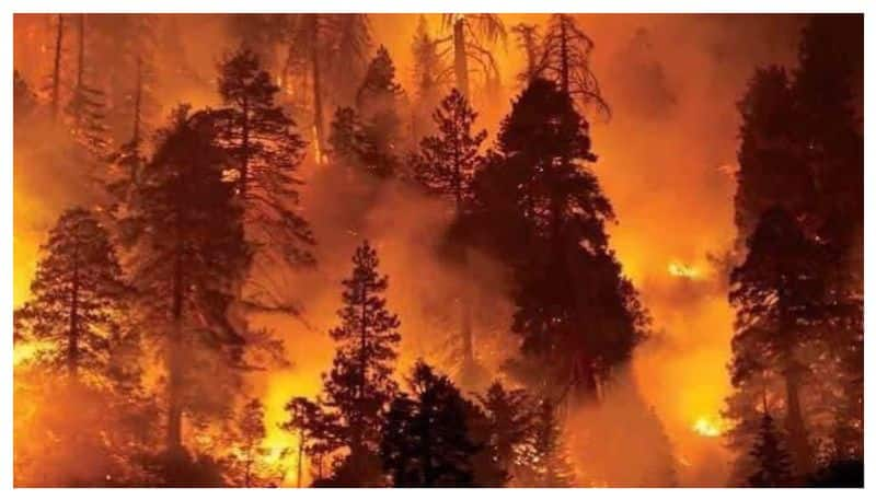 Uttarakhand Has Been Burning For 4 Days With Over 46 Wildfires Burning