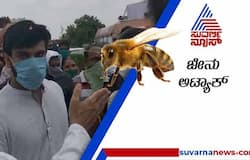 <p>sn Chiranjeevi, son Ram Charan and family attacked by bees during funeral</p>