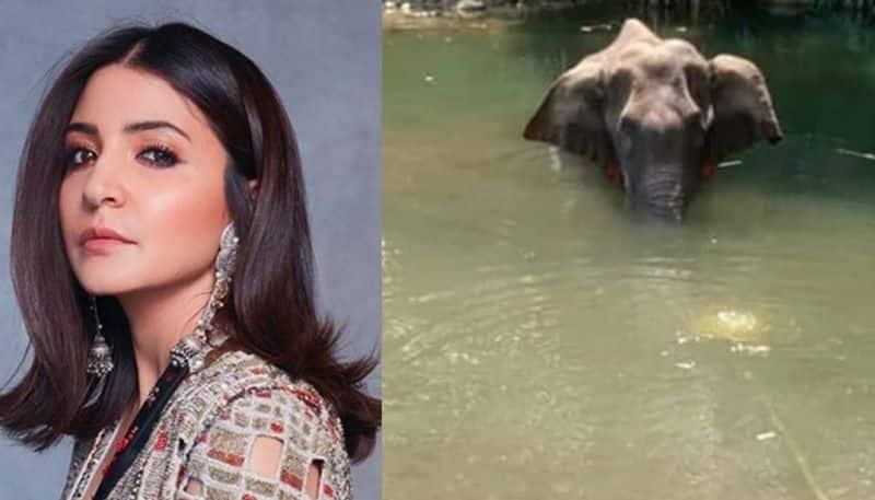 Pregnant elephant dies eating cracker stuffed pineapple, Anushka Sharma reacts