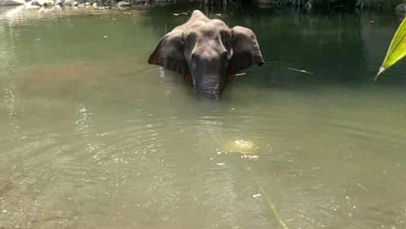 Elephant fruit-bombing case: With pressure mounting, Kerala forest department makes first arrest