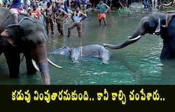 <p>Kerala Government files FIR on villagers who fed cracker-filled pineapple to pregnant elephant</p>