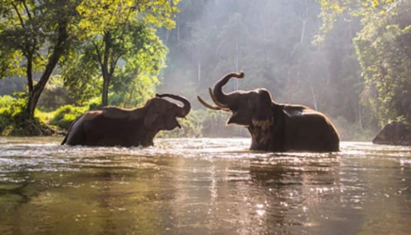 World Environment Day: Why elephants are imperative for sustenance of life