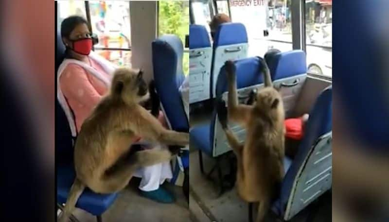 A big Monkey is riding in the state bus