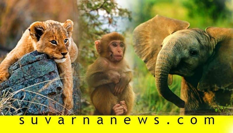 about Animal Rights in India That Every Citizen Should Know