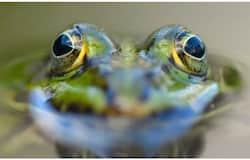 <p>frog</p>