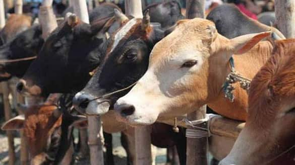 Increase of Corona Cases due to Cow slaughter Says Bannada Matha Shivalinga Shri grg