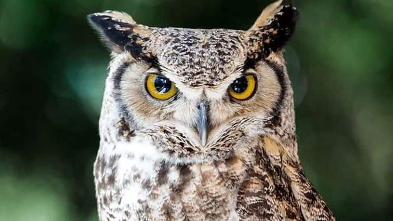 Owl Sit In front of the store in Sakleshpur in Hassan District