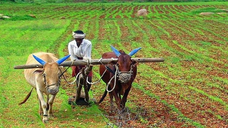 Farmers Are Ready For Agricultural Activities Heavy Rain Expected