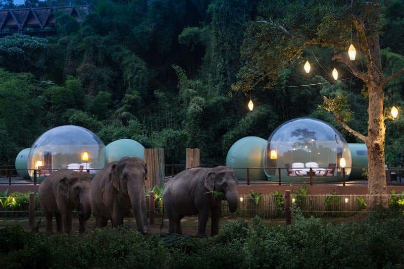 The jungle bubble resort of Thailand
