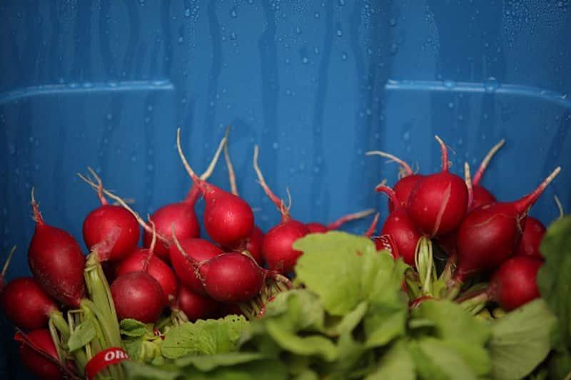 hydroponic farming in home