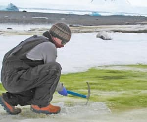 Algae grows Antarctic snow due to climate change