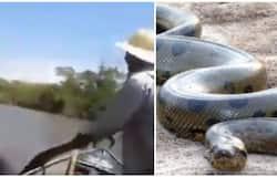 <p>anaconda</p>