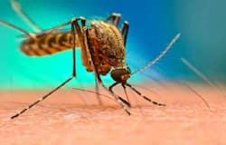 """<h1 itemprop=""""headline"""">mosquito</h1>"""