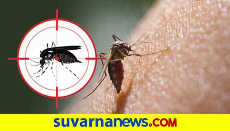 5 people found dengue positive in Mangalore