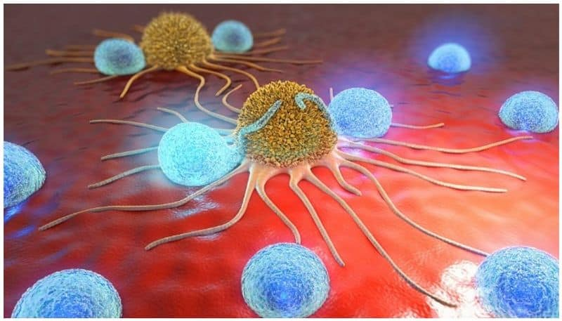 Major breakthrough: Scientists find fatty acid that can kill cancer cells