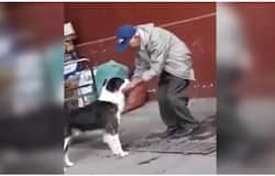 <p>Man helps dog</p>